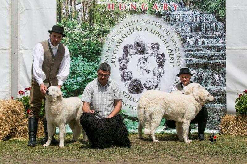 3 x CACIB Nemzetközi Kutyakiállítás
